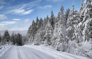 Rally Sweden, snow, M-Sport