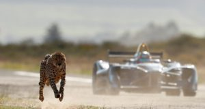 cheetah, Formula E